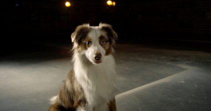 VIDEO: Novoroční ocas. Desetihodinový film pro psy má pomoci zvládat Silvestra
